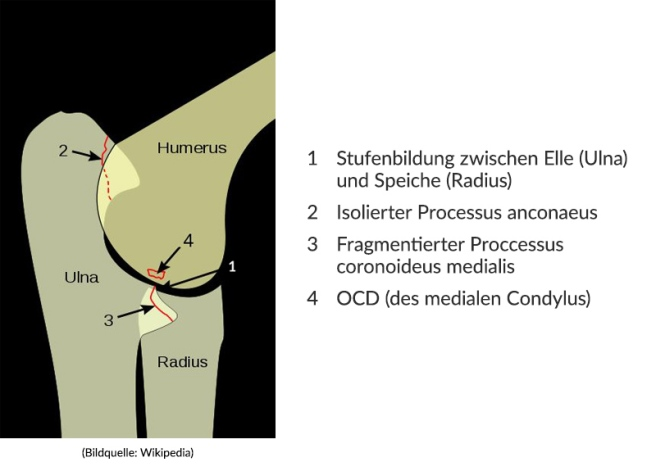 ellbogendysplasie